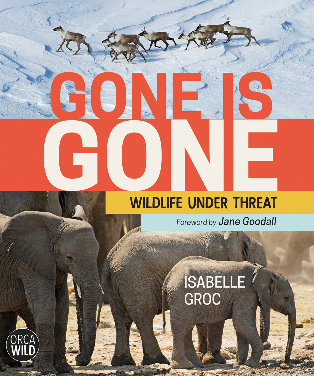 Gone Is Gone: Wildlife Under Threat